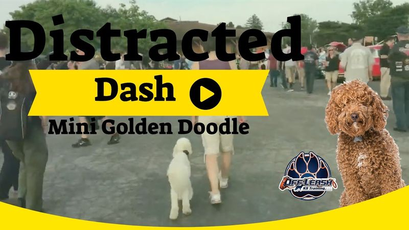 Distracted dash